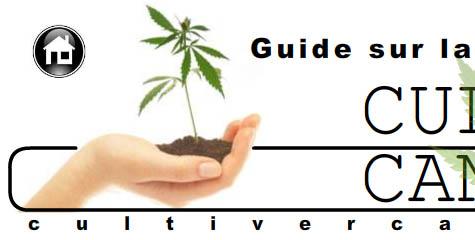 cultiver du cannabis